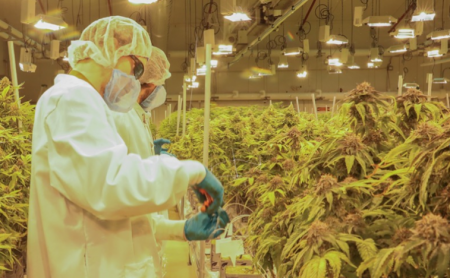 Wayland Group (CNSX:WAYL) (FRA:75M) (OTCMKTS:MRRCF) (formerly Maricann Group Inc.) announcement that it had secured a license to produce medical cannabis in the UK is a harbinger of opportunity in a significant new market that has the potential to generate at least as much wealth as the Canadian ACMPR movement has.