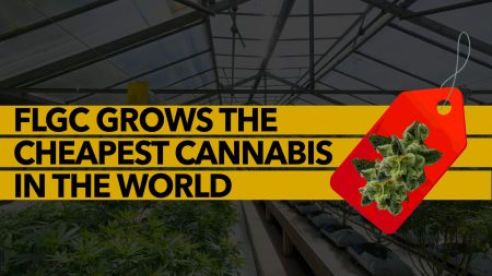 FLGC GROWS THE CHEAPEST CANNABIS IN THE WORLD