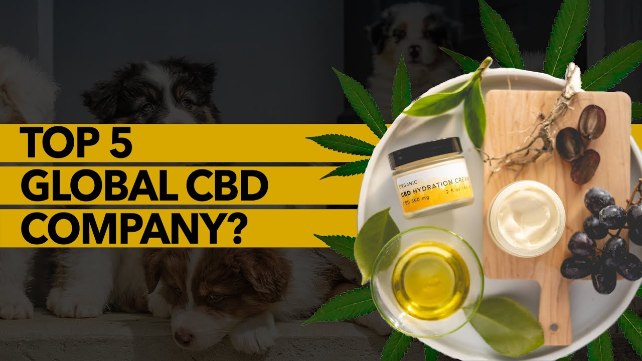 Award-Winning CBD Company with Top 5 Global Player Ambitions | Sweet Earth Holdings (SE)